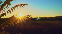 Rays of sun through the bush branch. Autumn leaves Stock Footage