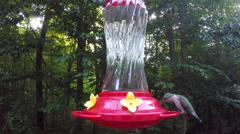 Hummingbird Feeding at a hummingbird feeder. Stock Footage