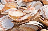 Scallop shells heap Stock Photos