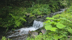 The picturesque mountain streamlet Stock Footage