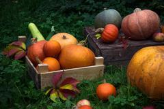 Diverse assortment of pumpkins in a wooden chest. Autumn harvest Stock Photos