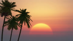 Palm trees on a background of tropical sunrise Stock Footage