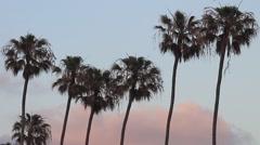 La Jolla - Palm Trees at Sunset  Stock Footage