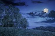 Few trees on hillside meadow at night Stock Photos