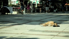 Stray dog basking in the sun on a pedestrian street Stock Footage