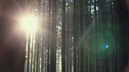 Sunrise in the woods Stock Footage