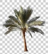 Blowing on the wind green full size real tropical palm tree wiith alpha Stock Photos
