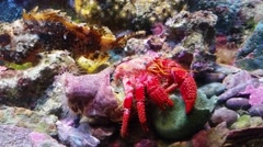 Hermit Crab Under The Sea Stock Footage