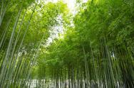 Bamboo Grove Stock Photos
