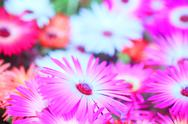 Flower garden Stock Photos