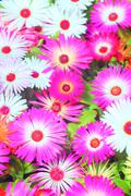 Flower garden Kuvituskuvat