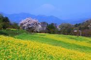 Kanagawa Prefecture, Japan Stock Photos