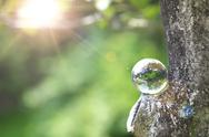 Glass globe in a forest Stock Photos