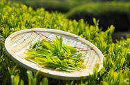 Japanese tea Stock Photos