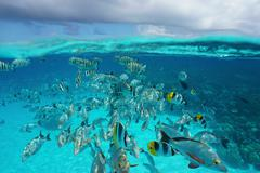 Shoal of tropical fish underwater with cloudy sky Kuvituskuvat