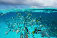 Shoal of tropical fish underwater with cloudy sky Stock Photos