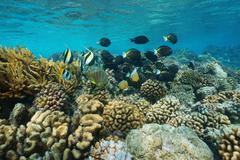 Underwater coral reef with tropical fish Stock Photos