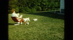 1963: four white dogs playing outdoor around a person sitting in a chair  Stock Footage