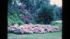 1950: garden scene flowers pretty multi colour FLORIDA Stock Footage