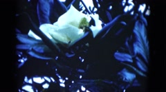 1950: insects engaging pollination with flower FLORIDA Stock Footage