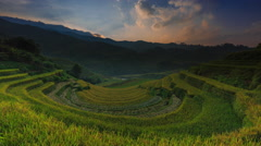 Rice fields on terraced of Mu Cang Chai, YenBai, Vietnam. Stock Footage