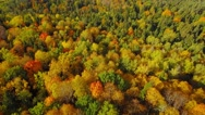 Autumn nature aerial landscape flight over brightly colored forest. Stock Footage