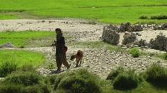 Farmer woman guiding young calf,Pangong,Ladakh,India Stock Footage