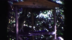 1961: a cute little monkey swinging and playing in an enclosure MINNESOTA Stock Footage