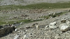 Group of pashmina goats in mountain area,Pangong,Ladakh,India Stock Footage