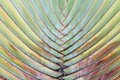 Palm leaves pattern for background. Stock Photos
