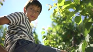 Young boy climbing up a tree and smiling. Stock Footage