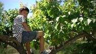 Little teen boy on an apricot tree in the sunlight looking at camera. Stock Footage