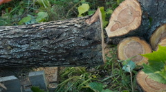 Cutting through wood with chainsaw slow motion Stock Footage