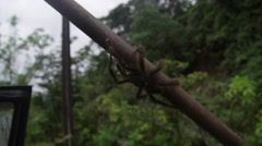 Tarantula on Broom Handle Stock Footage