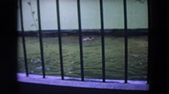 1972: the treacherous alligator circles his bed for victims WISCONSIN Stock Footage