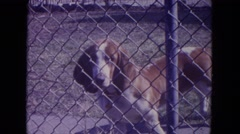 1972: dog behind fence staring car parked near house WISCONSIN Stock Footage