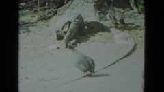 1972: pigeons and various art sculptures in an outdoor setting WISCONSIN Stock Footage