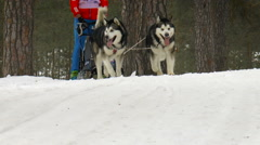 Winter Sled Dog Race. Sport animals Stock Footage