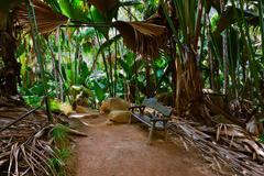 Pathway in jungle - Vallee de Mai - Seychelles Stock Photos