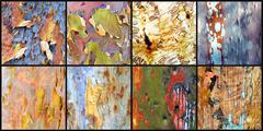 Collage of colourful Australian gumtree bark Stock Photos