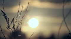 Setting Sun behind Waving Dried Autumn Grass Stock Footage