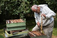 Beekeeper removing honeycomb from beehive Stock Photos