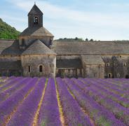 Abbey Senanque and Lavender field, France Stock Photos