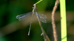 Dragonfly with green fly bug Stock Footage