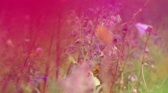 Summer Wildflower Meadow, Shoot Through Red Flower Petals Stock Footage
