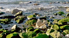 Pan on green rocks on the shore Stock Footage