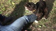 Dog is engaged in masturbation Stock Footage
