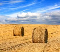 Hay rolls on farming field under nice clouds in sky Kuvituskuvat