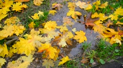 Yellow maple leaf lying in a puddle in fall Stock Footage