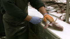 Medium shot of a man cutting fish in a processing plant  Stock Footage